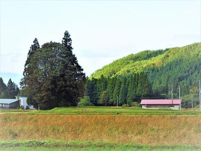 トトロの森 李山丹南山神