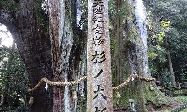 Suginoosugi