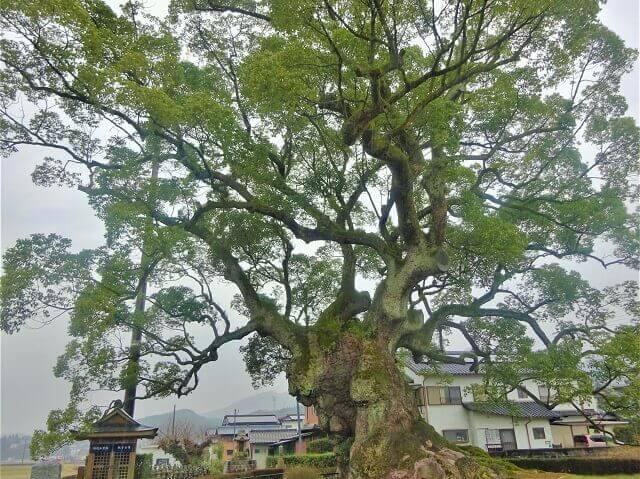 川古の大楠公園