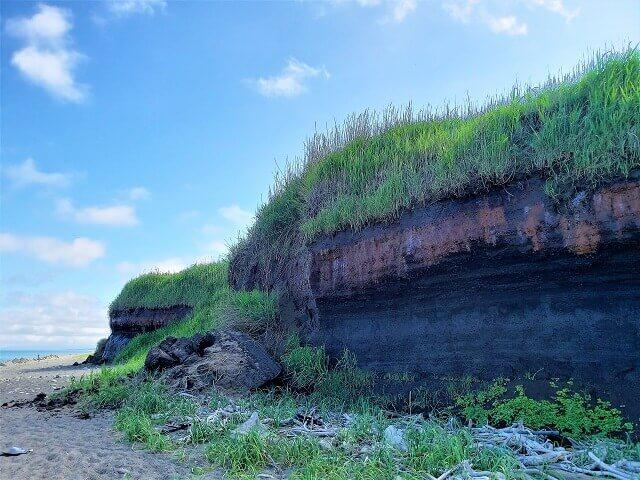 出来島最終氷河期埋没林